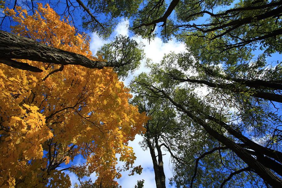 look-up-at-autumn-sky-and-trees-jiayin-ma